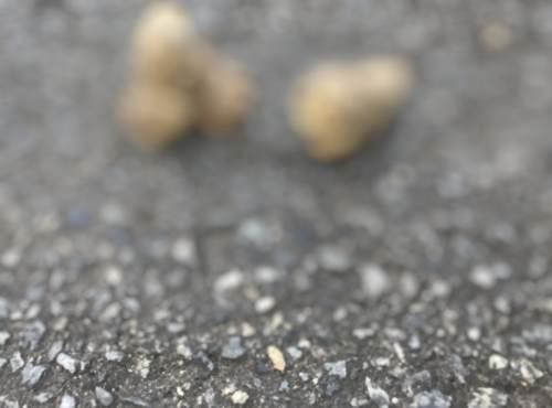 コンクリートの猫のうんこ