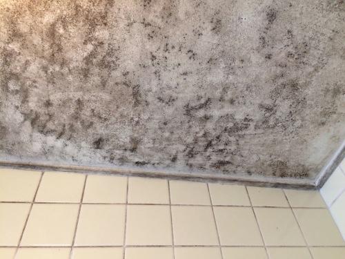 お風呂場のカビ掃除前