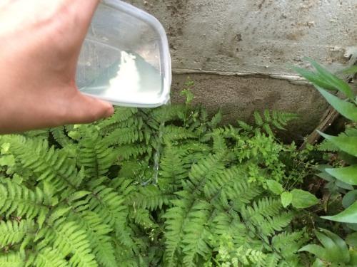 塩水を除草剤代わりにしてみた