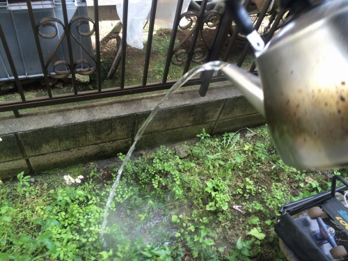 除草剤代わりにお湯を使って草むしり