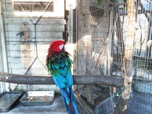ペンギンに会える動物園、そして桜の花見の無料スポット!川崎市・夢見ヶ崎動物公園は意外に凄かった オウム