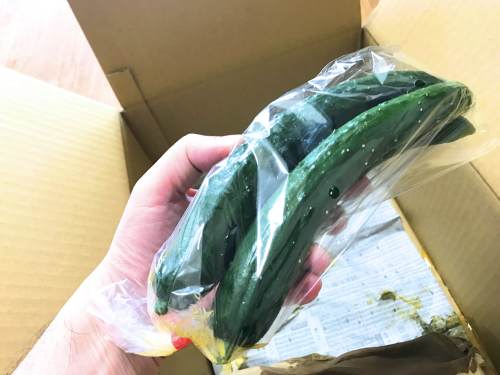 長崎県松浦市のふるさと納税『旬のお野菜+産みたて濃厚玉子』きゅうり