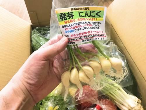 長崎県松浦市の野菜と玉子のふるさと納税