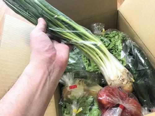 長崎県松浦市のふるさと納税『旬のお野菜+産みたて濃厚玉子』万能ねぎ