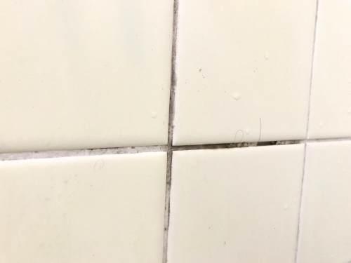 お風呂の目地に生えたカビ